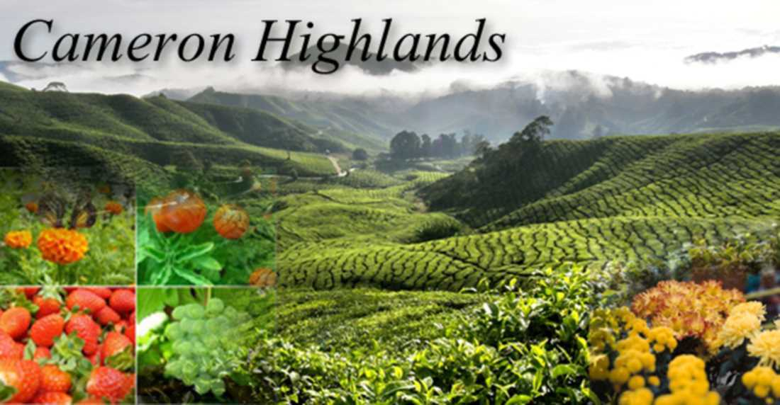 Don't miss it! When you go Cameron Highland Featured Image